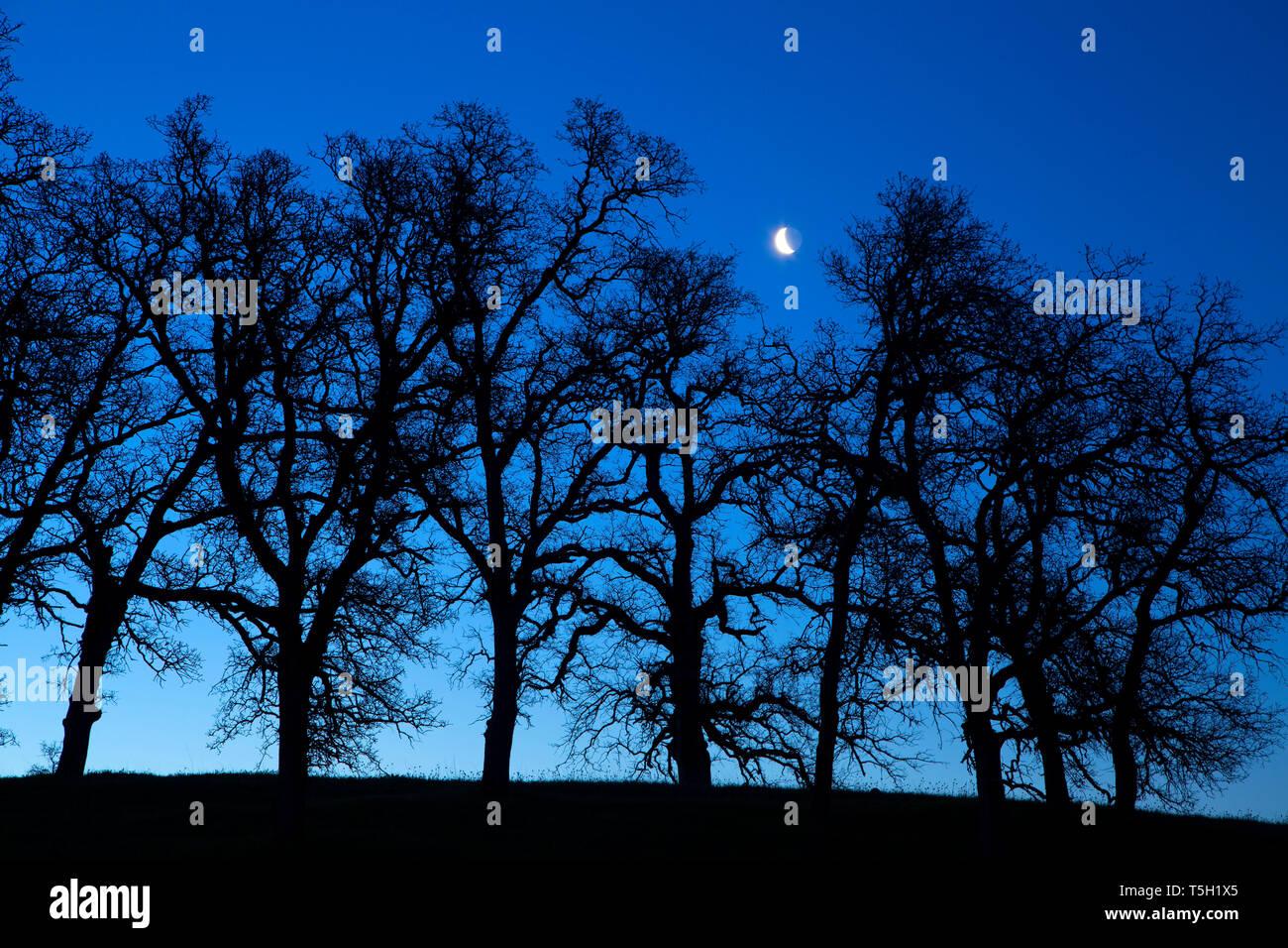 Oak woodland dawn, Sacramento River Bend Area of Critical Environmental Concern, California - Stock Image