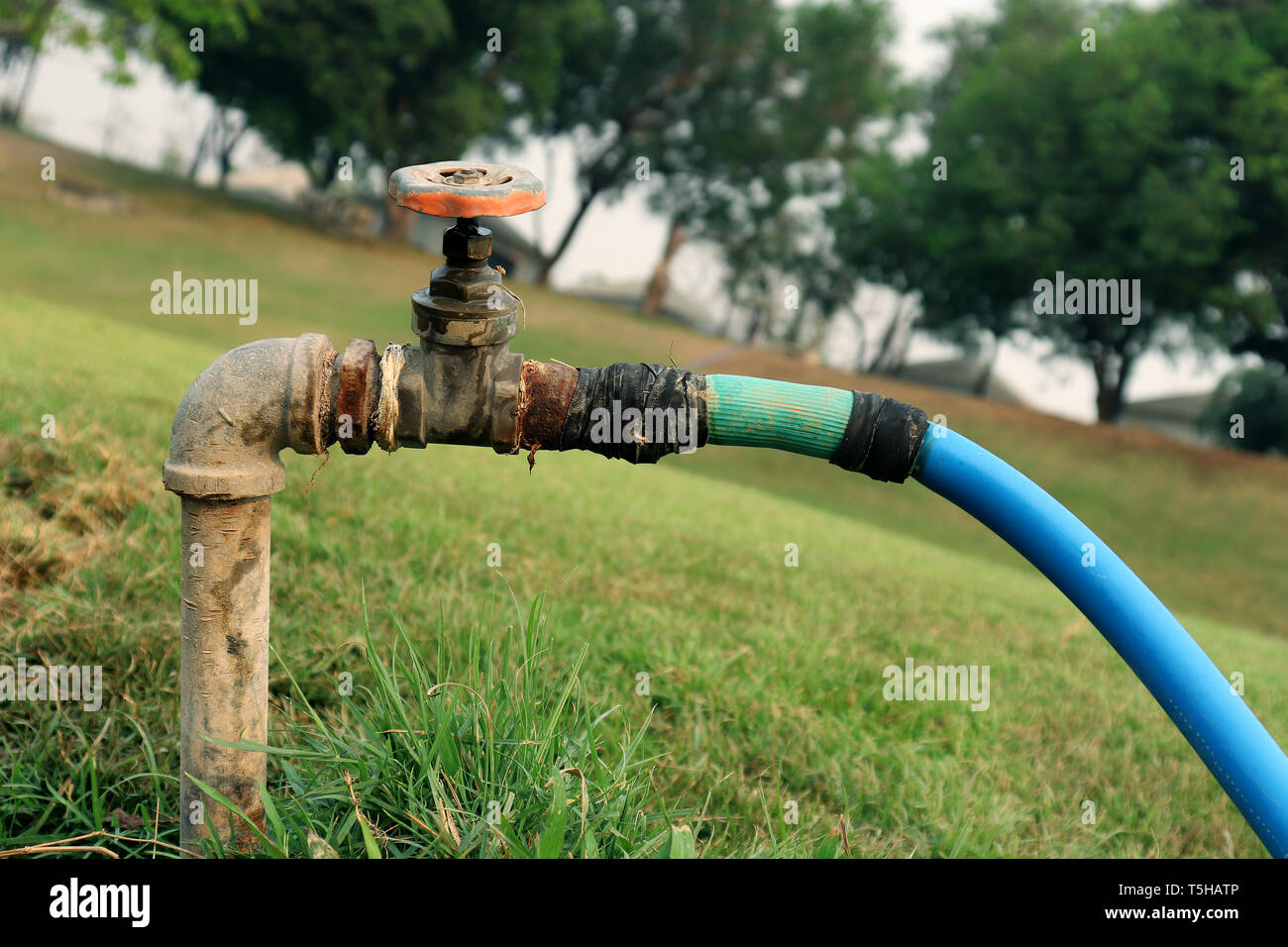 Faucet Water from faucet water valve, gate valve in the green garden High resolution image gallery. - Stock Image