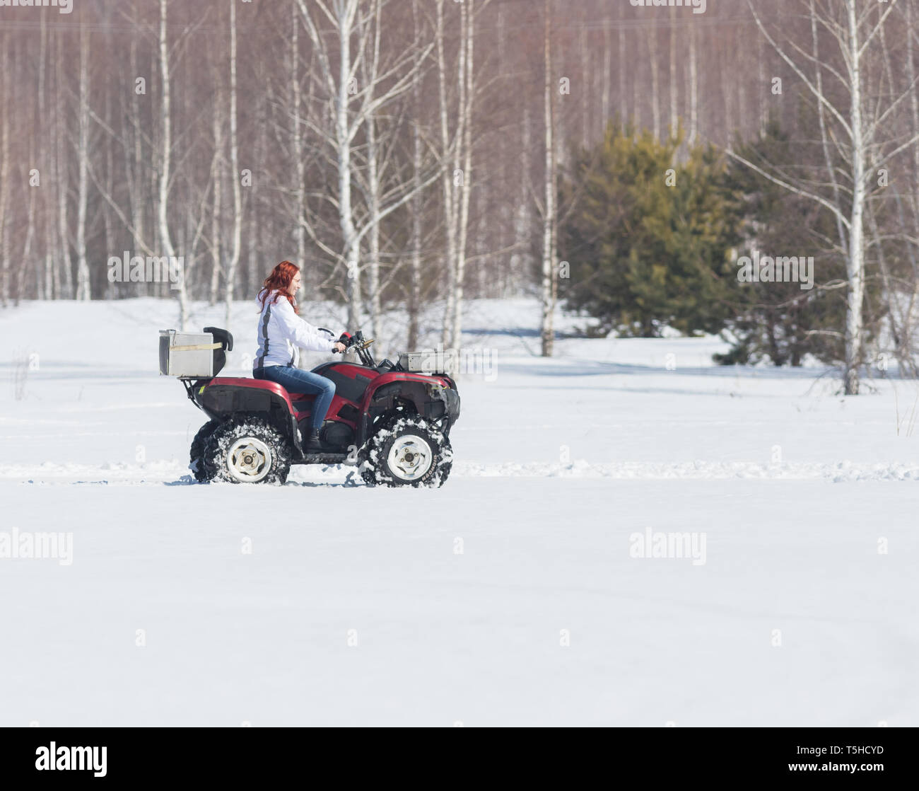 A winter forest. A woman with ginger hair riding big red snowmobile - Stock Image