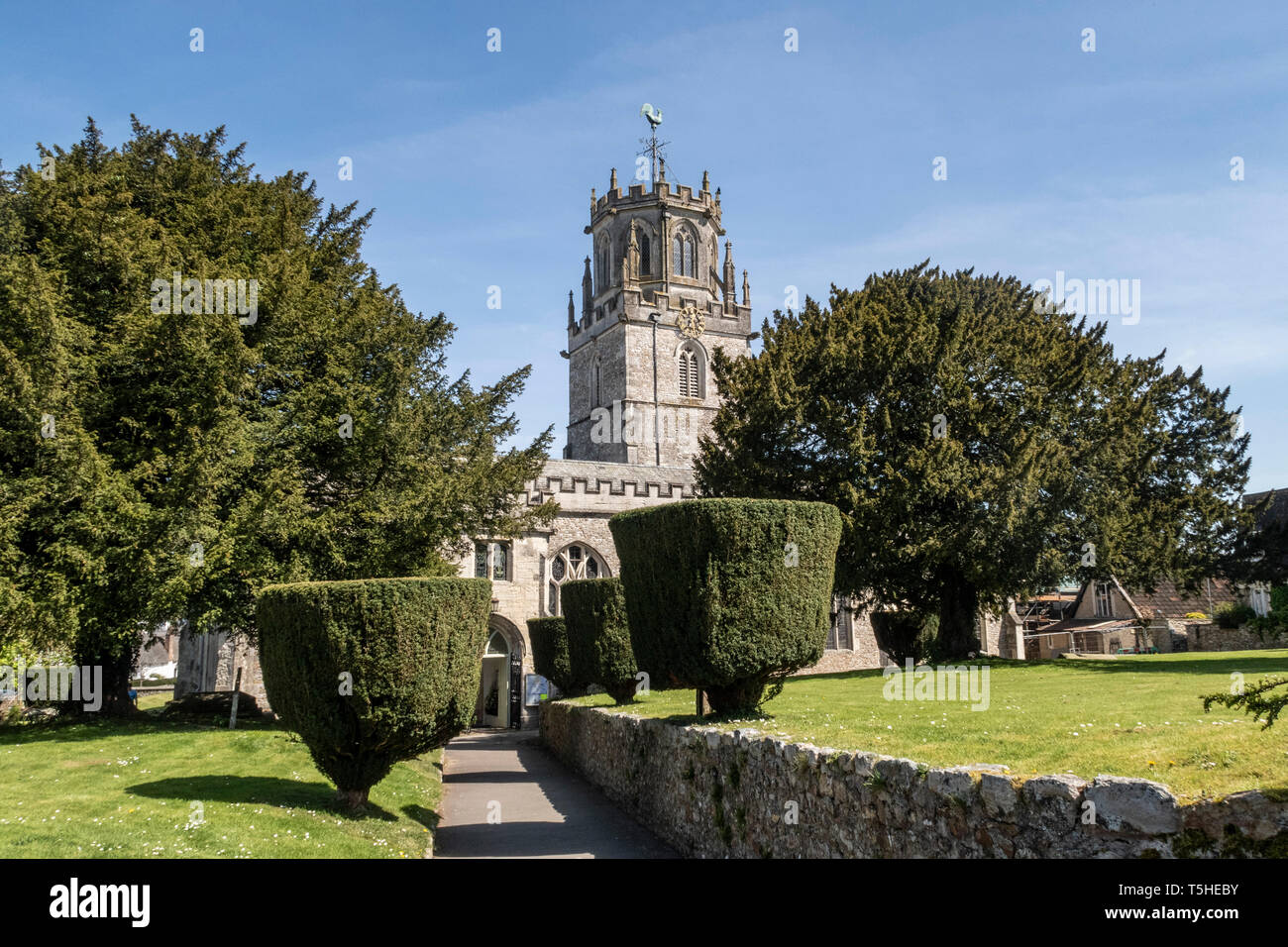 The church of St Andrew, Colyton, Devon. with clipped yew tress in the garden. - Stock Image