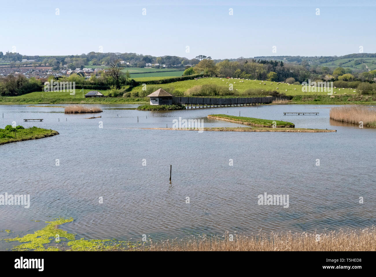 Seaton wetlands, sitting beside the River Axe in the Axe valley, Devon, England, UK Stock Photo