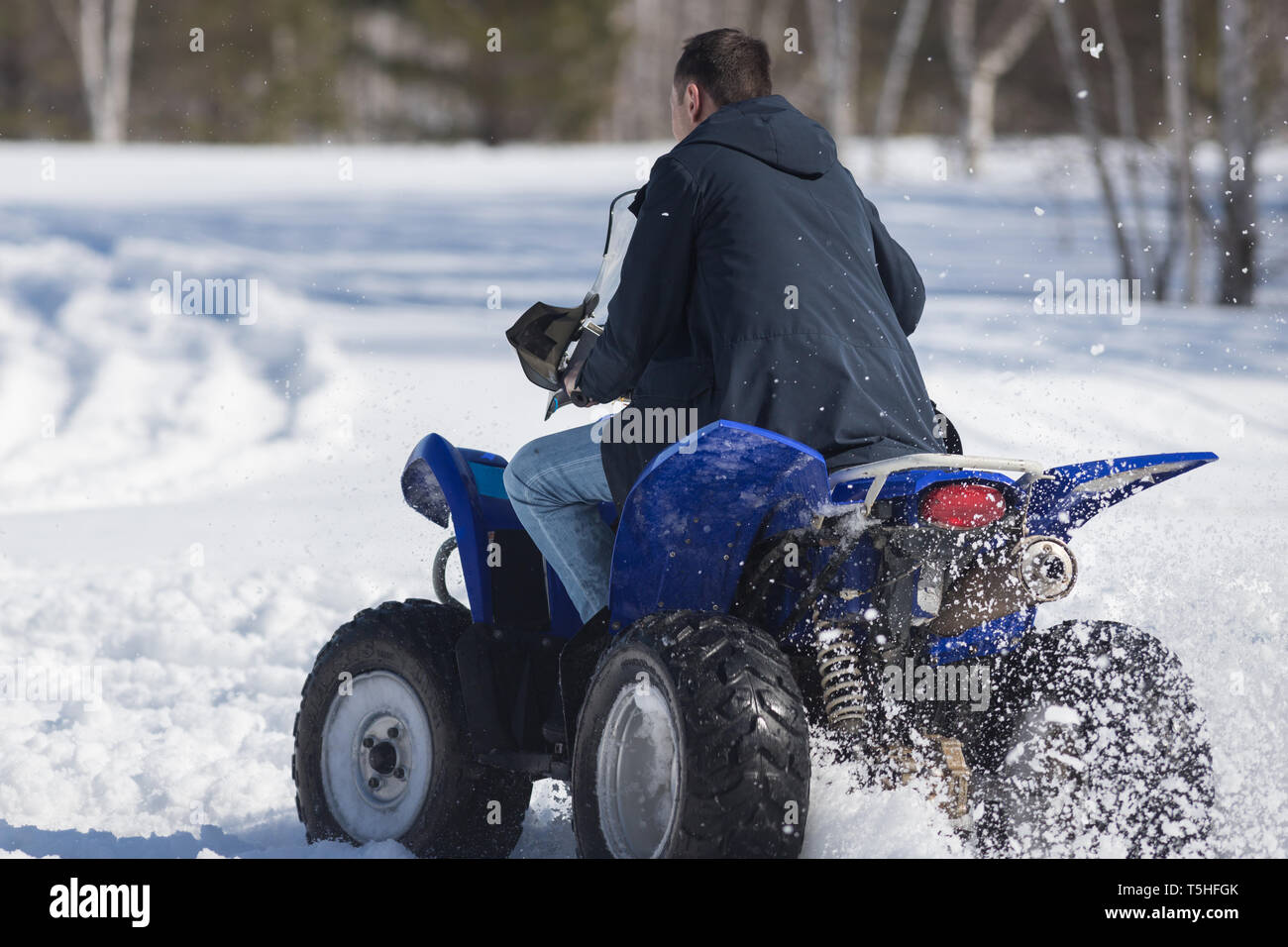 A winter forest in daylight. An adult man riding a big blue snowmobile. Back view Stock Photo