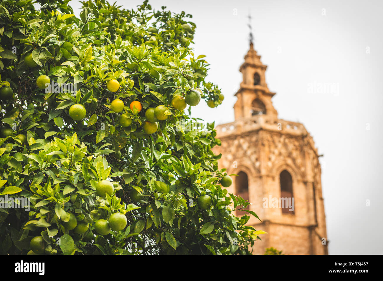 Spain, Valencia, view to El Micalet with orange tree in the foreground Stock Photo