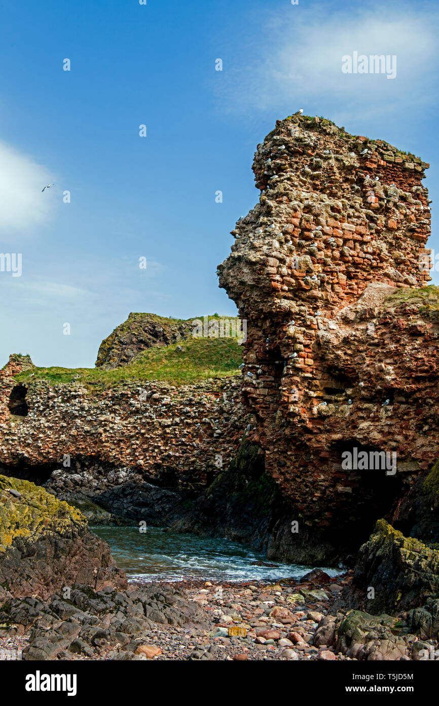 The ruined remains of Dunbar Castle on the south east coast of Scotland in East Lothian - Stock Image