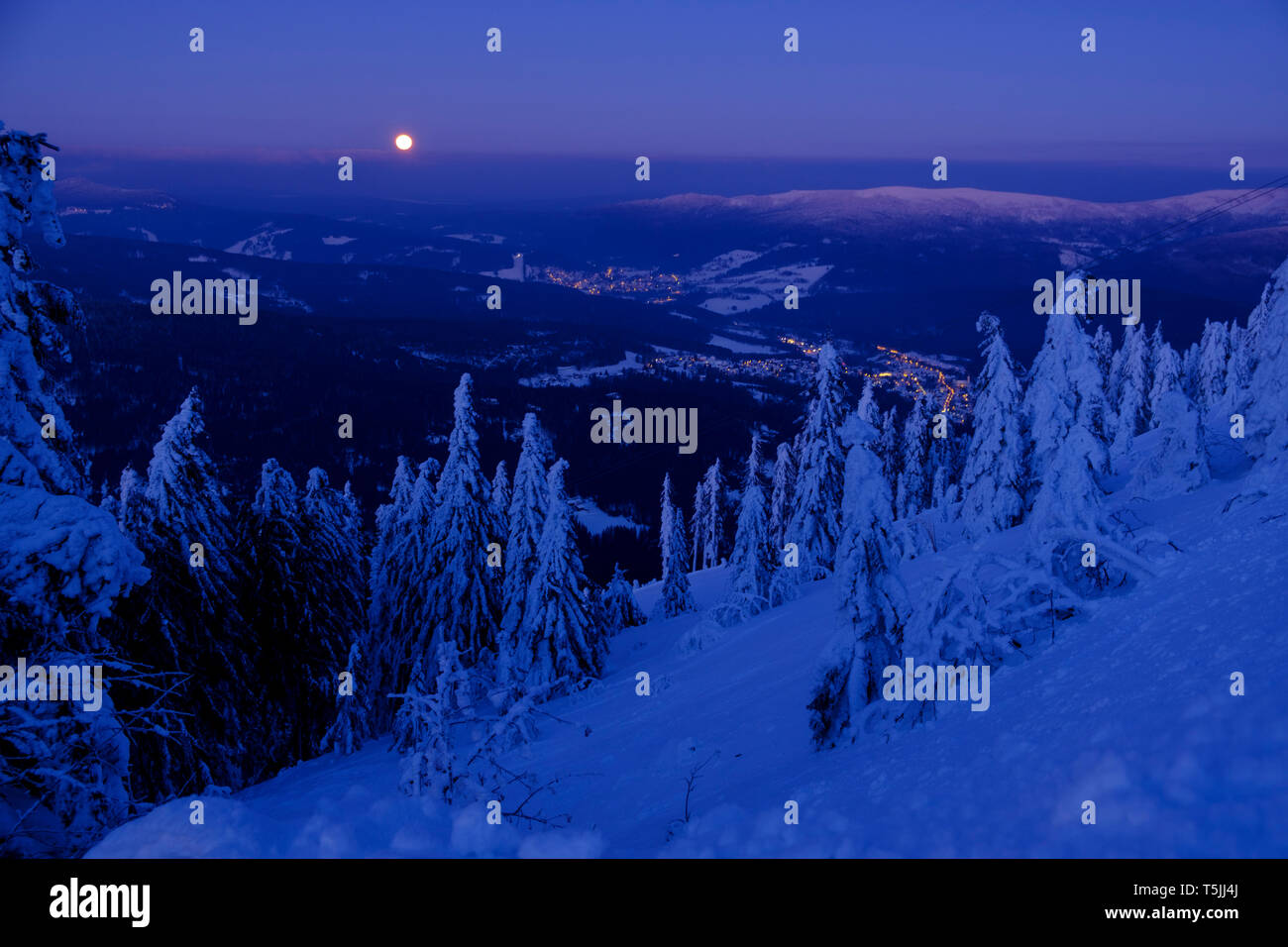 Germany, Bavaria, Bavarian Forest in winter, Great Arber, Arbermandl, snow-capped spruces at dusk with moon - Stock Image