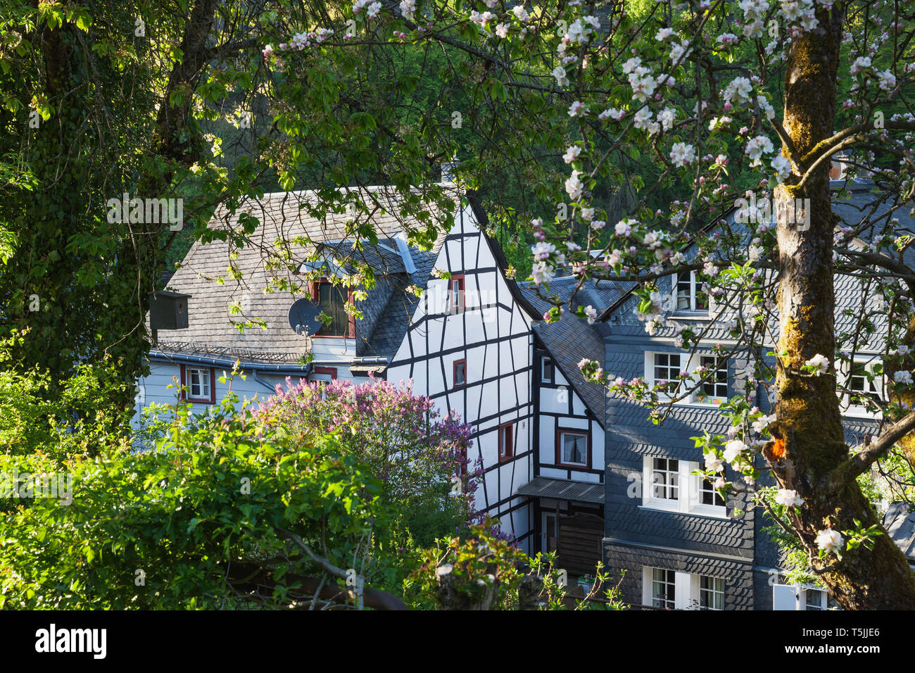 Germany, North Rhine-Westphalia, Eifel, Monschau, spring, apple blossom, Flieder blossom, historic typical half-timbered house and typical house with - Stock Image