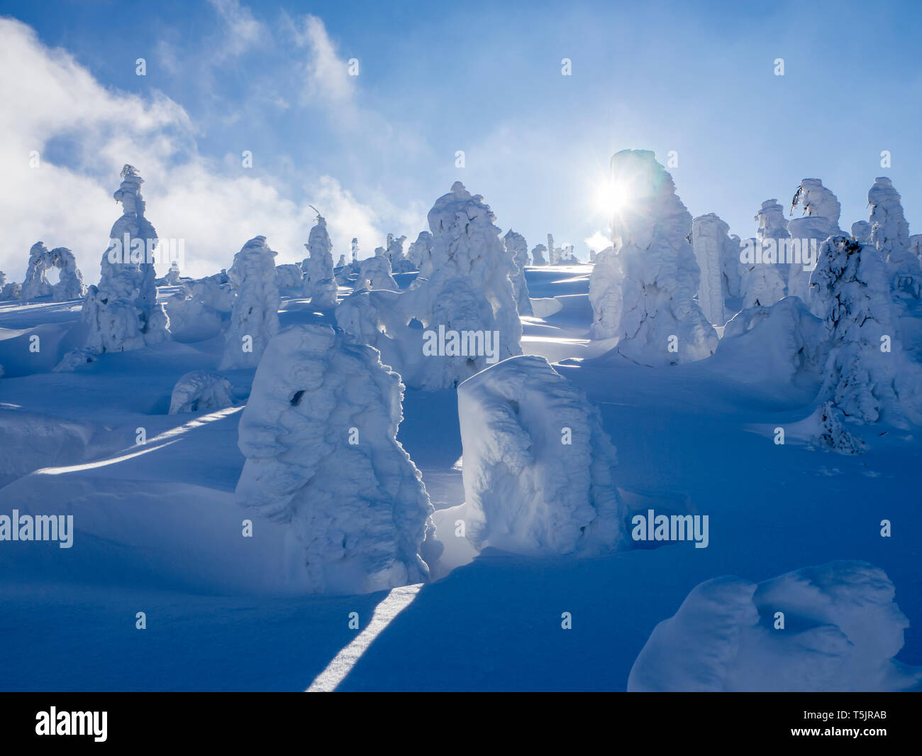 Germany, Upper Bavarian Forest Nature Park, winter landscape with snow-covered conifers at backlight - Stock Image
