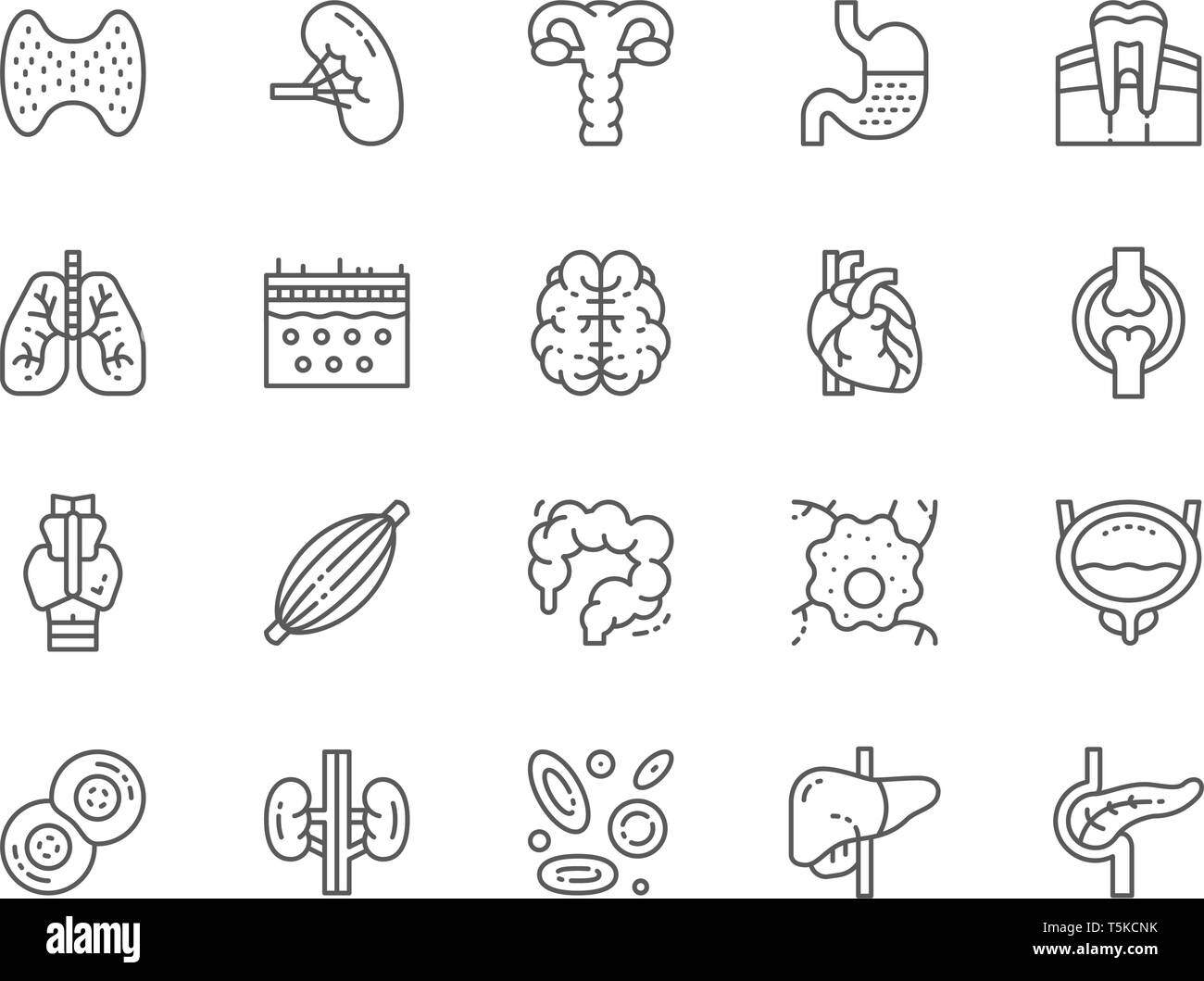 Set of Human Internal Organs Line Icons. Thyroid Gland, Spleen, Uterus, Stomach, Lungs, Brain, Heart and more. Pack of 48x48 Pixel Icons - Stock Image