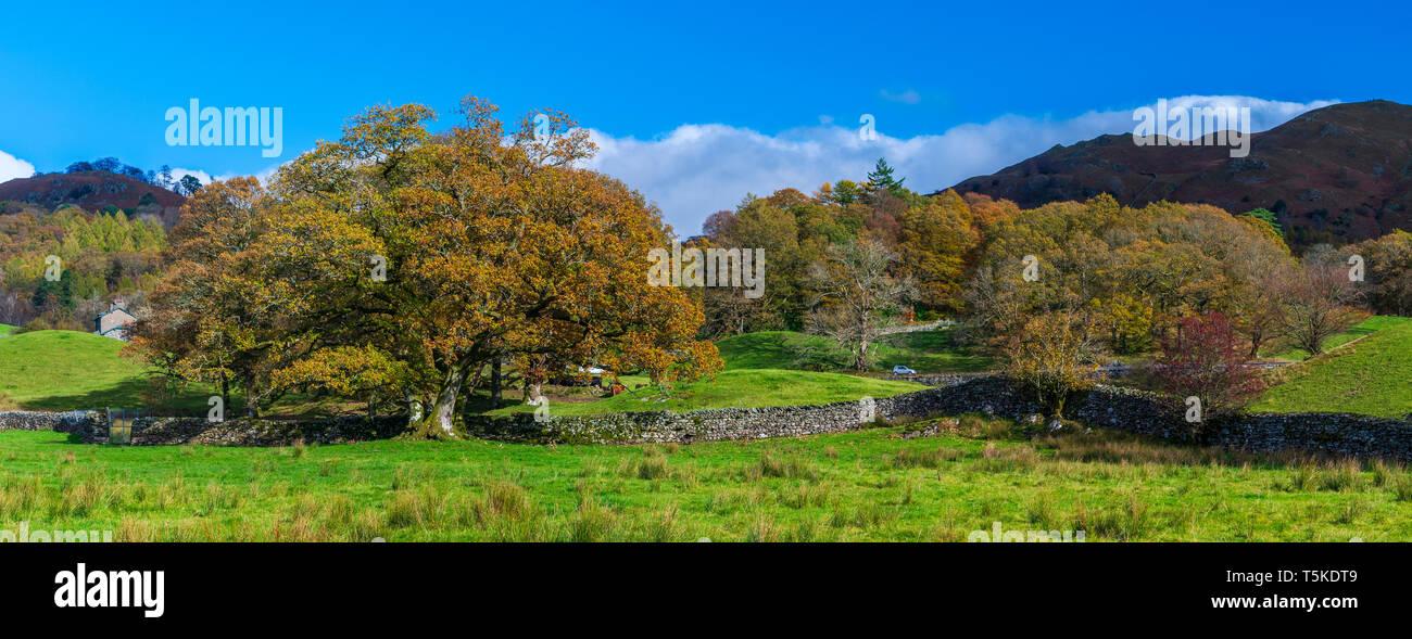 Cumbrian Way from Skelwith Bridge to Elterwater, Lake District National Park, Cumbria, England, UK, Europe. - Stock Image