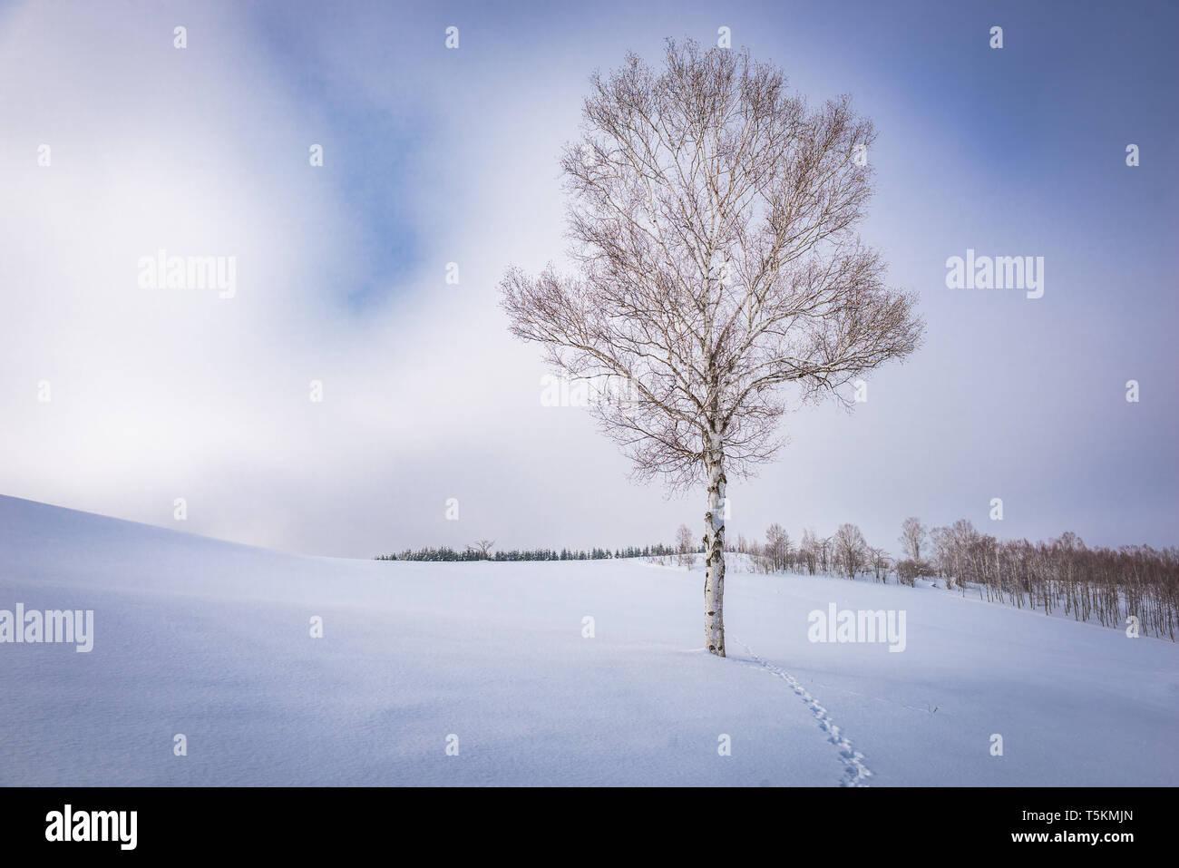 Biei, Japan in winter on Panorama Road. - Stock Image