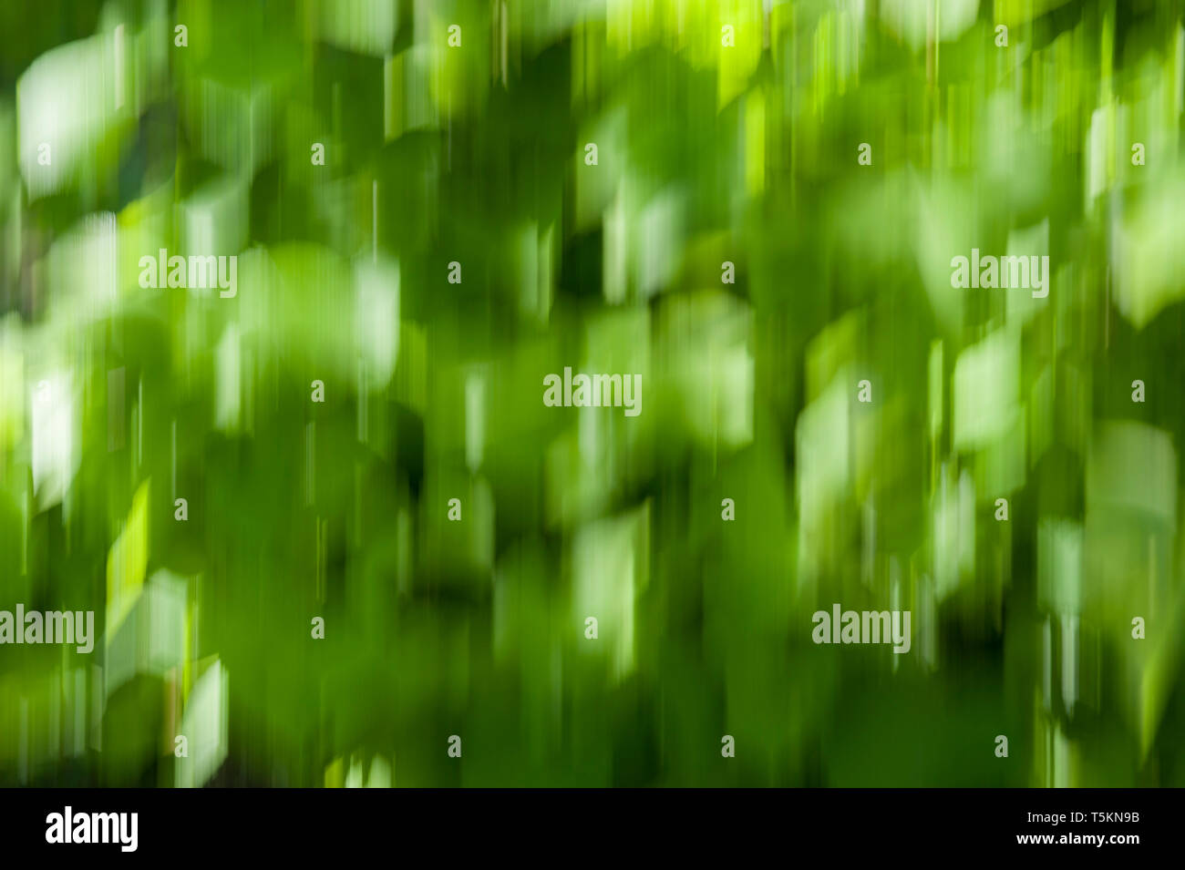 motion blur background, green bokeh background - blurred leaves - Stock Image