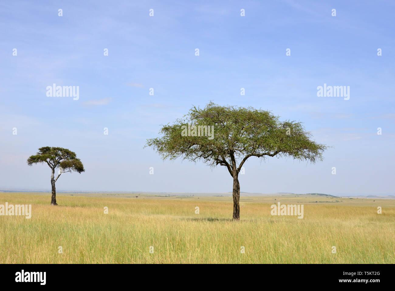 landscape, Maasai Mara, Kenya, Africa - Stock Image