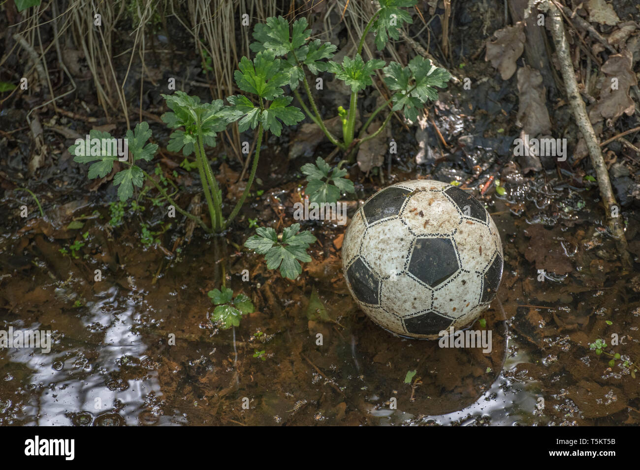 Slightly deflated plastic football lost in a drainage ditch. Missing ball, lost football. In among the weeds metaphor, game abandoned. Stock Photo