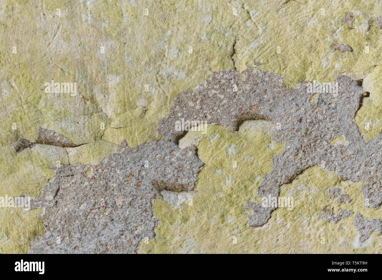 Painted cracked and peeling render coming away from cement background surface. Old paint texture. - Stock Image