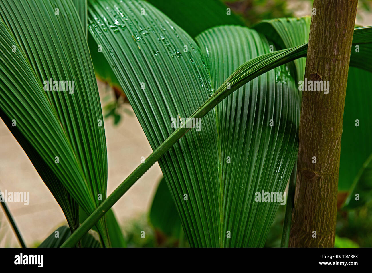 Pandanales High Resolution Stock Photography and Images - Alamy
