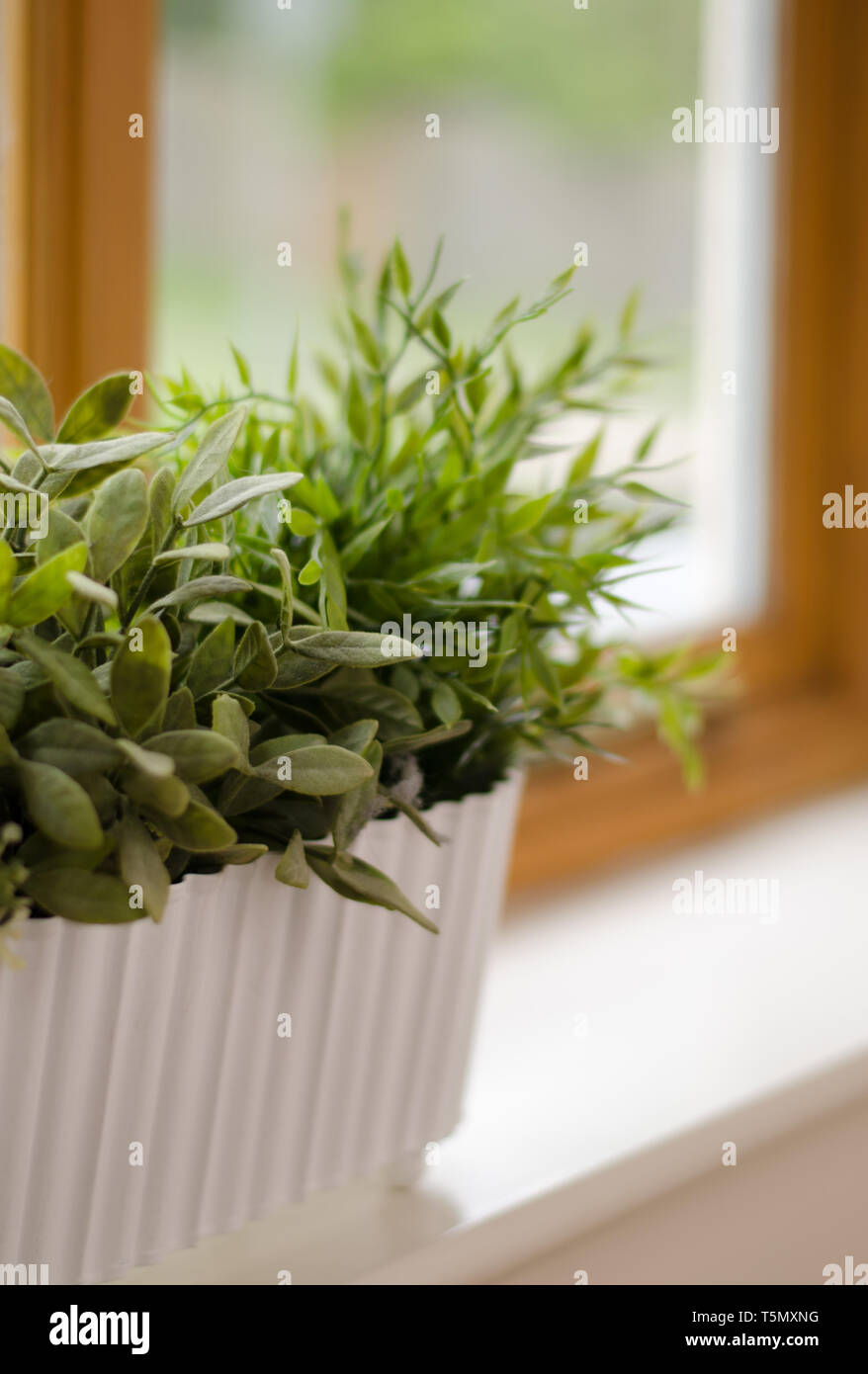Window box of herbs in a country cottage window Stock Photo