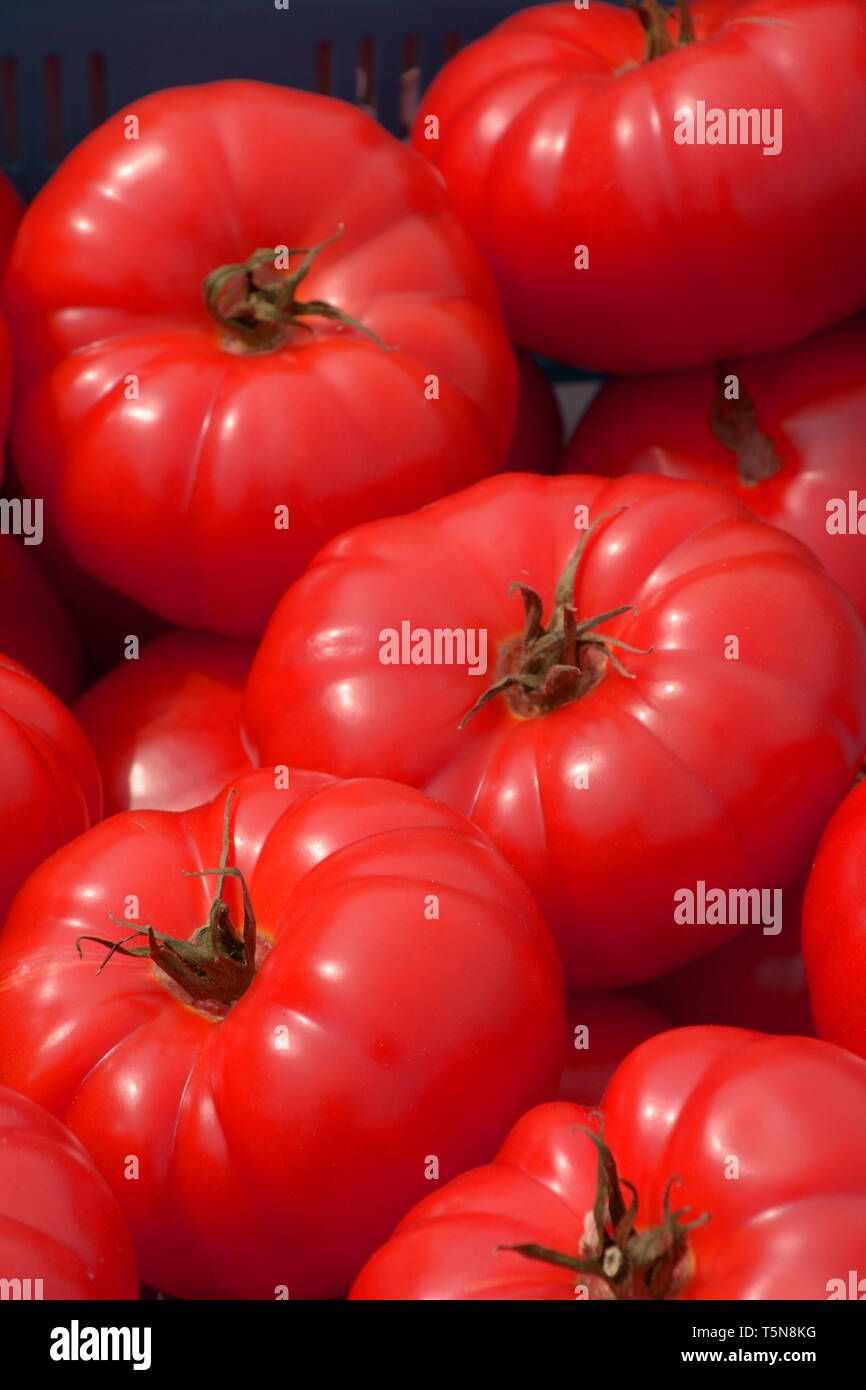 some ripe and sweet tomatoes on outdoor market, big red beef tomatoes on a market in bavaria - Stock Image