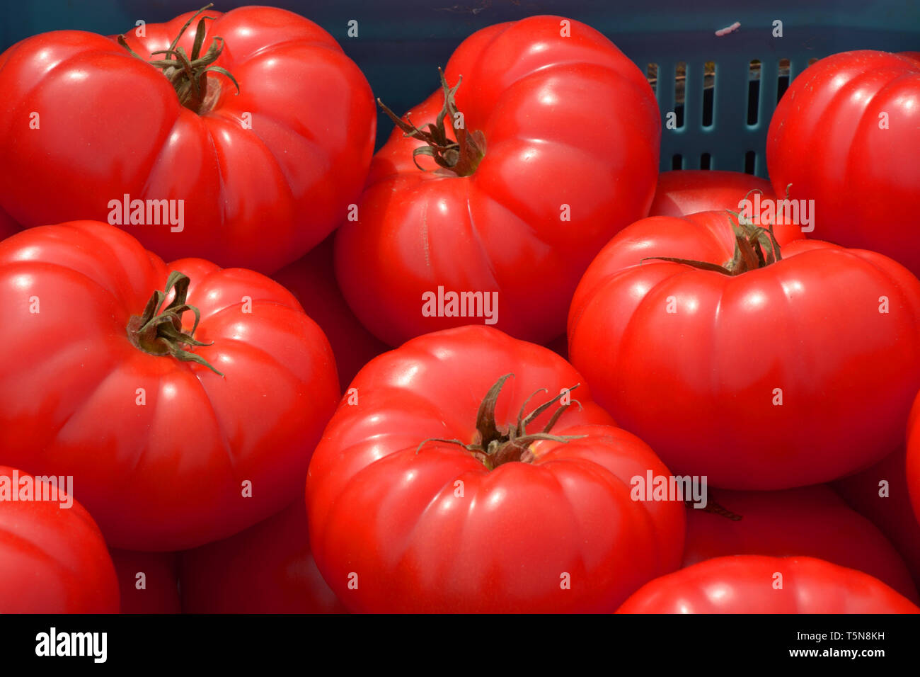 red beef steak tomatoes for sale macro shot, big red beef tomatoes on a market in bavaria - Stock Image