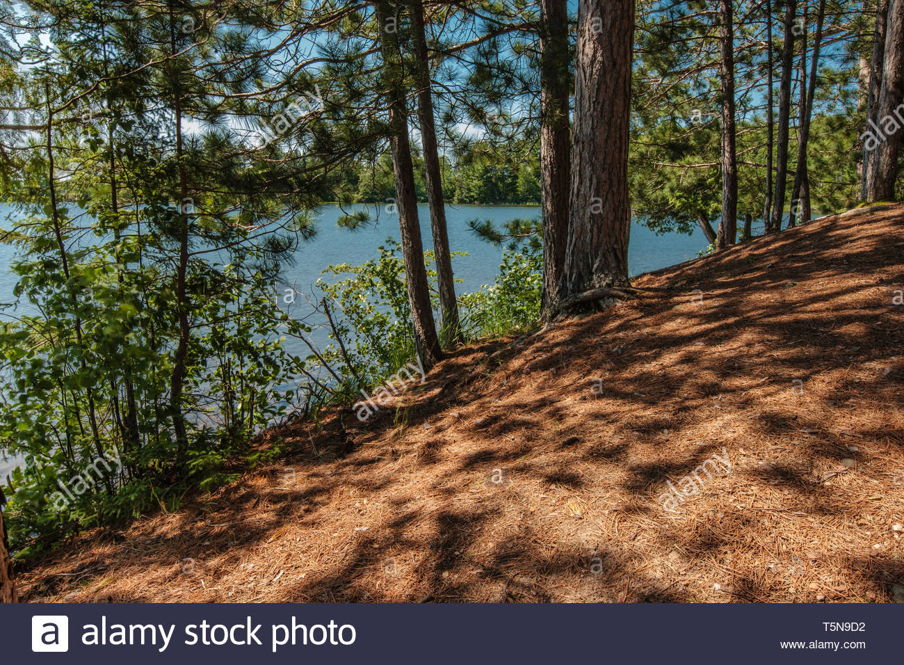 The afternoon sun casts shadows from the nearby pines on the pine-needled covered shoreline along Star Lake, near Star Lake, Wisconsin, Vilas County,  - Stock Image