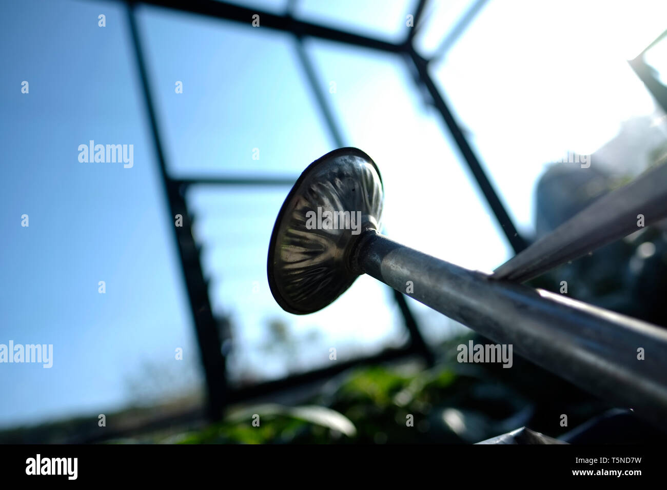 Views of a watering can in a greenhouse in a private English cottage country garden. - Stock Image