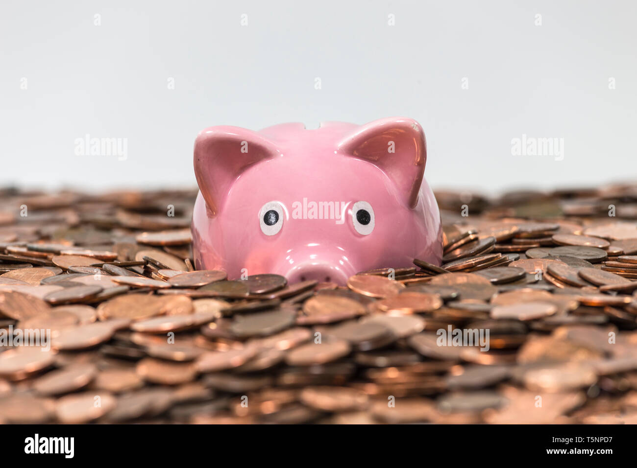 Pink piggy bank swimming in copper pennies. - Stock Image