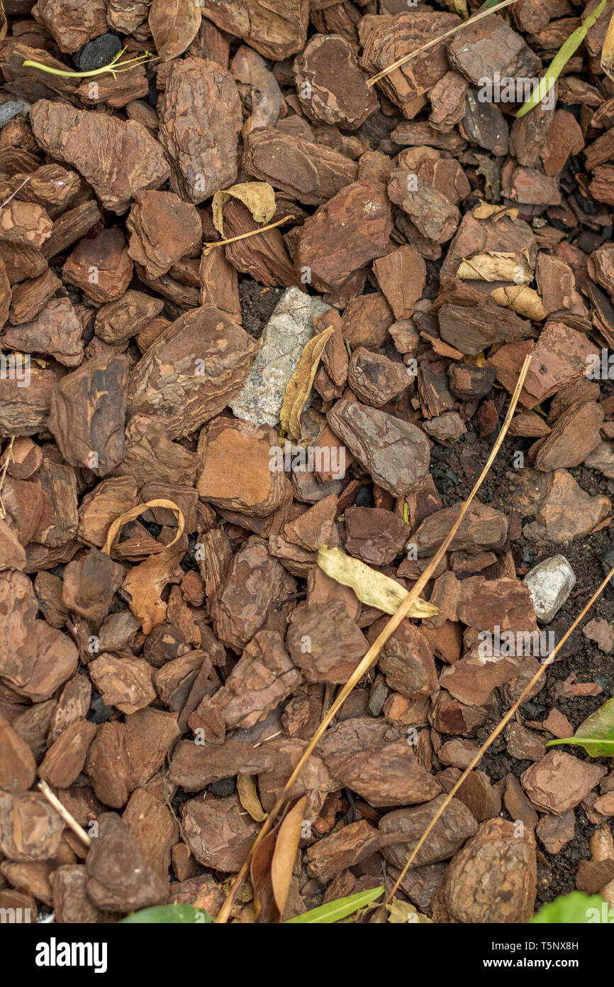 Wood bark chips in a flower bed in a garden to assist moisture retention in the soil image with copy space - Stock Image