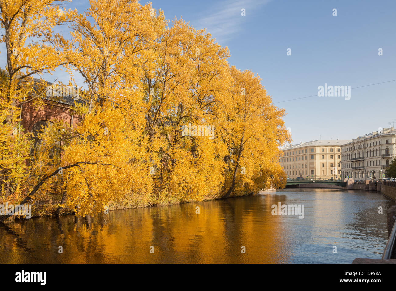 Autumn cityscape of St. Petersburg. Old poplars with yellow leaves lean over the water of the river Moika on a sunny autumn day - Stock Image
