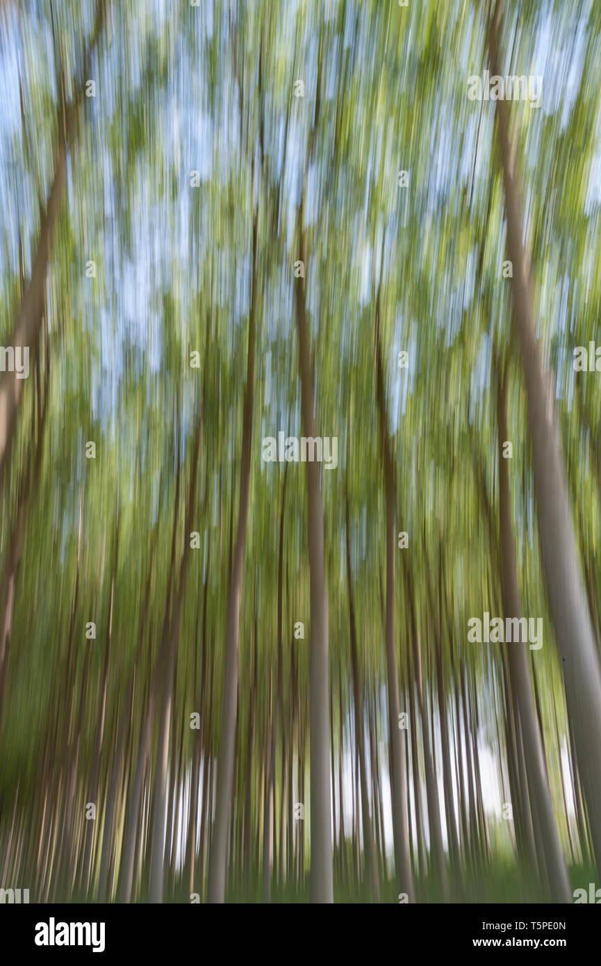 Abstract motion blur of trees in a forest - long exposure - Stock Image