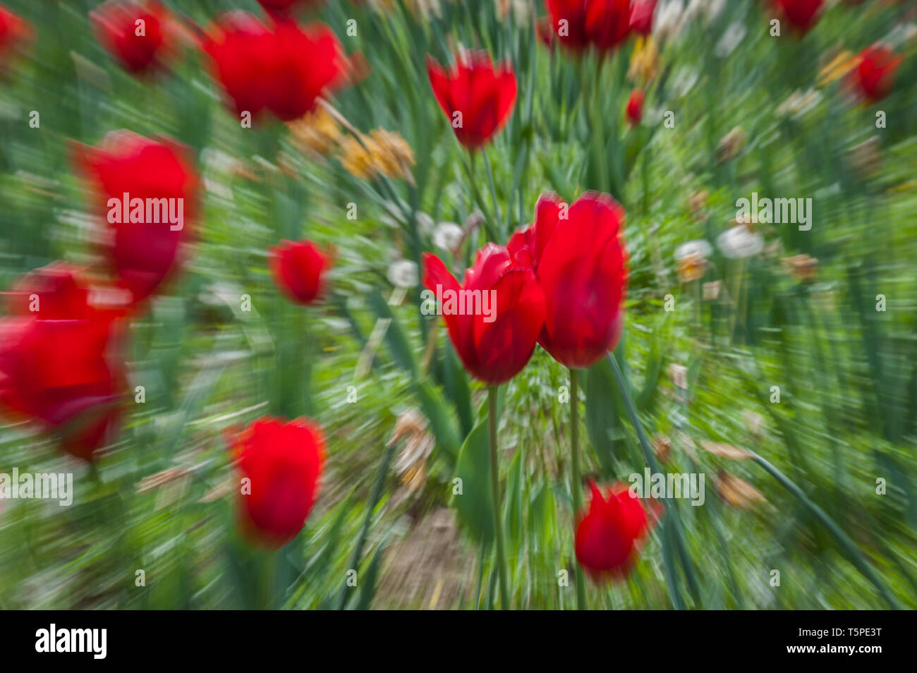 Abstract motion blur of flowers  - long exposure - Stock Image