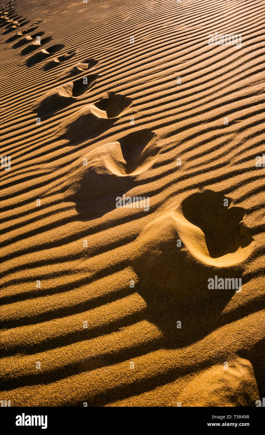 Footsteps in sand dune, trailing off into the distance - Stock Image