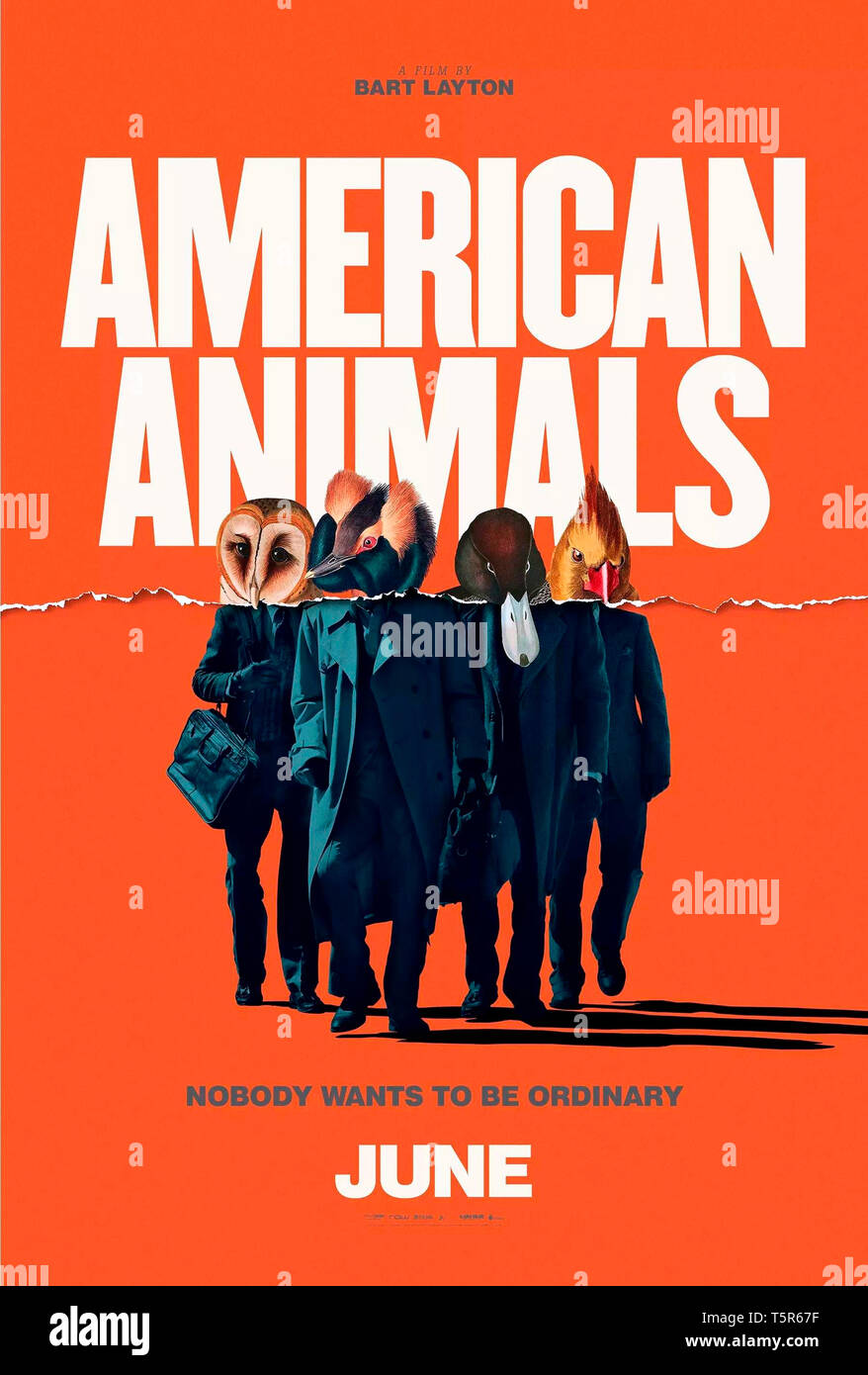 AMERICAN ANIMALS 2018 de Bart Layton teaser americain Prod DB © Film4 - New Amsterdam Film Company - RAW / DR Stock Photo