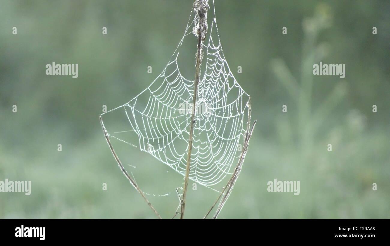 Spiders Webs with dew in spring.  Taken in Bristol UK - Stock Image
