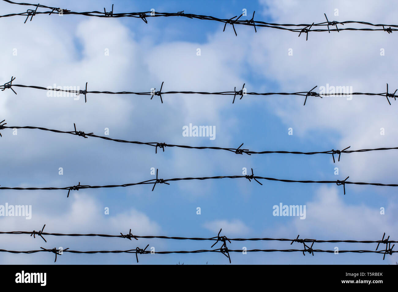 Barbed wire against the blue sky. The blue sky is covered with barbed wire. Prison and blue cloudy sky. Barbed wire fence - Stock Image