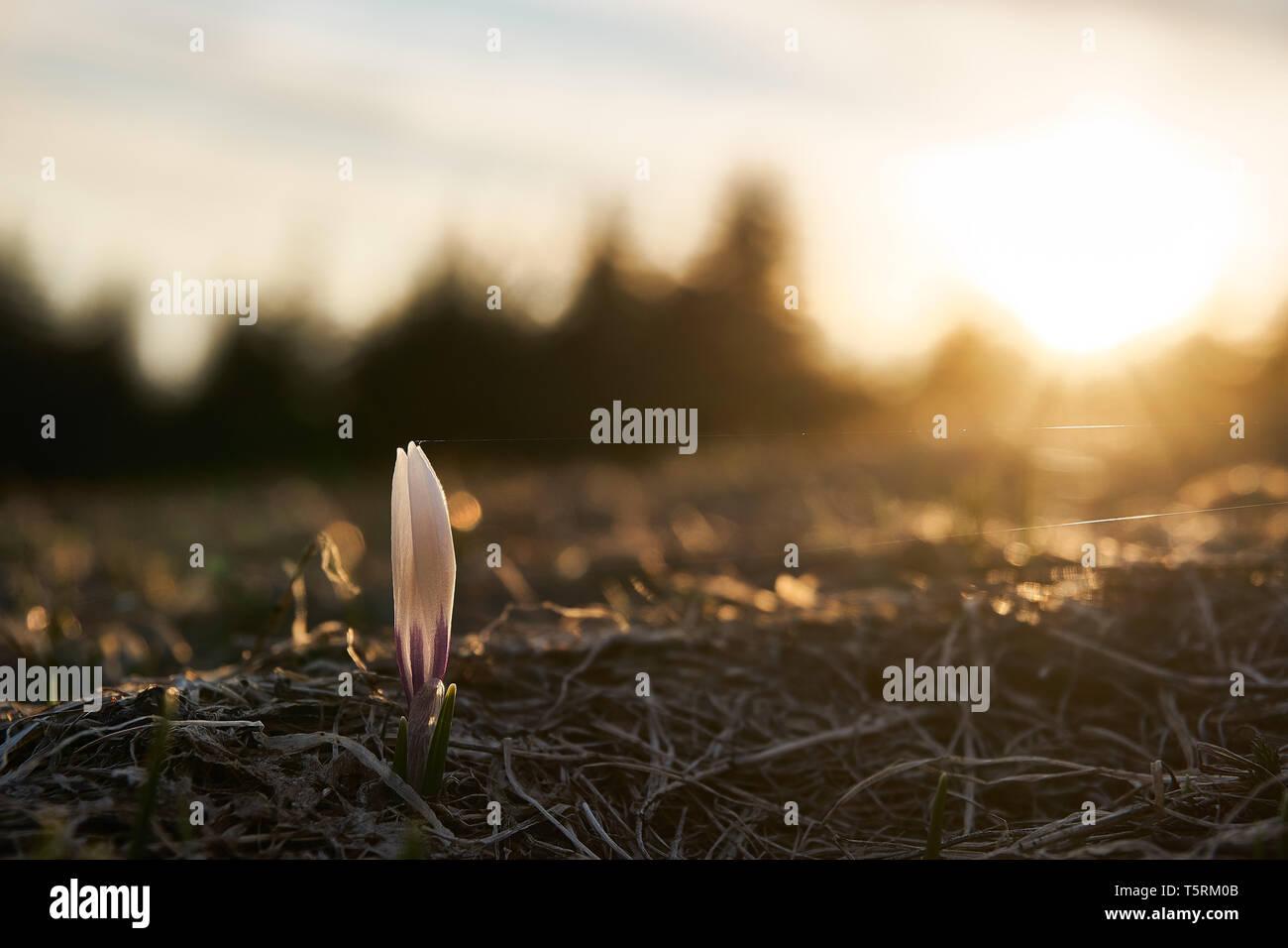 Die Blume im Frühling | Nahaufnahme - Stock Image