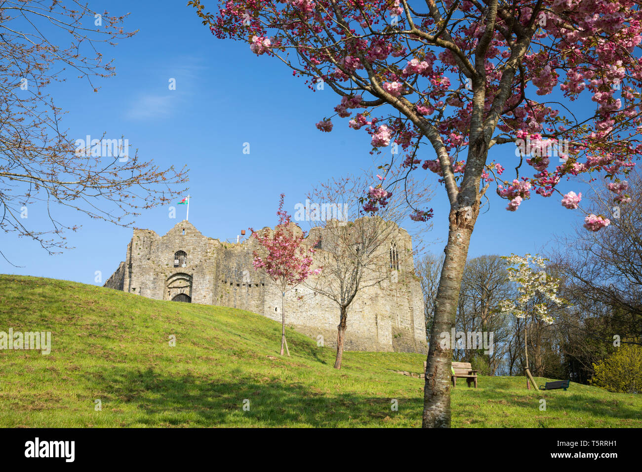 Oystermouth Castle with spring blossom, Mumbles, Gower Peninsula, Swansea, West Glamorgan, Wales, United Kingdom, Europe - Stock Image
