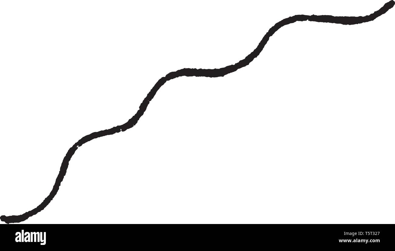Picture of plants name undulate showing a zigzag line