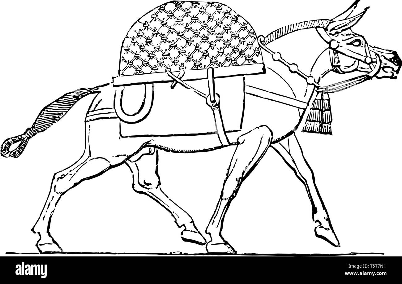 This is the image of the animal called mule. The animal life of Assyria was extremely varied. This image shows a mule from this area, vintage line dra - Stock Image