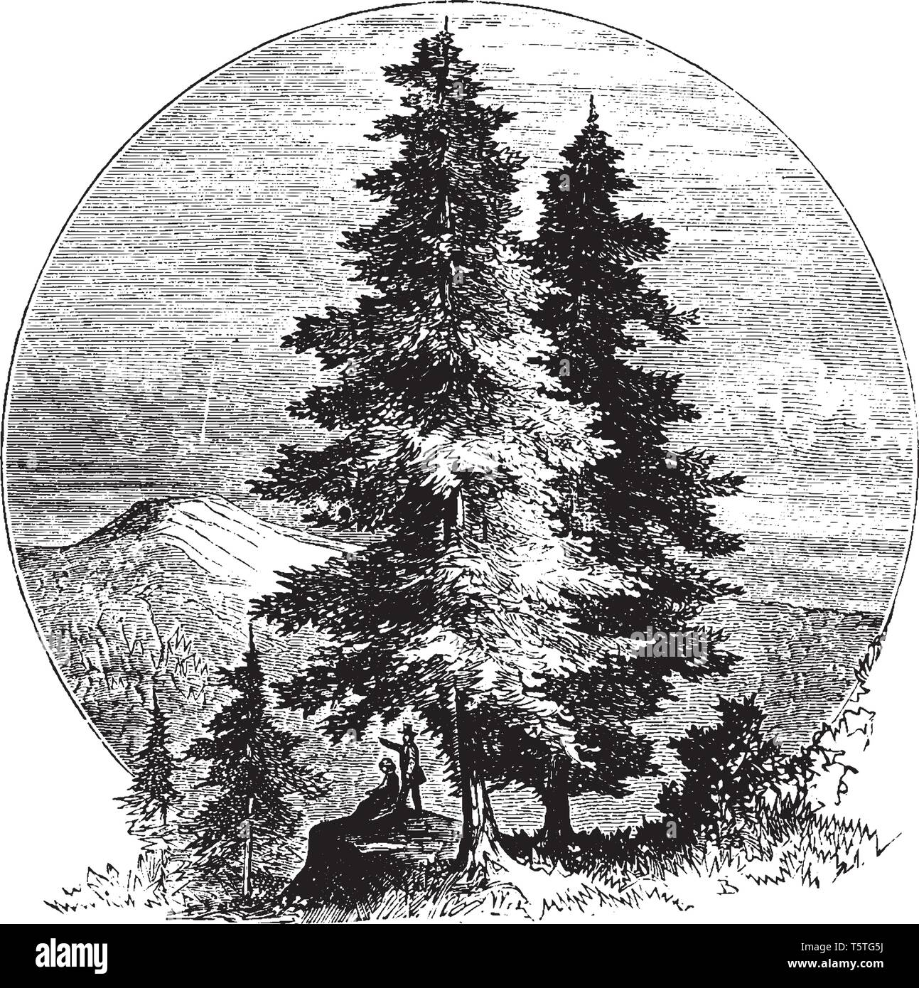 A picture of some pine trees near the mountains and forest. A couple can also be seen relaxing under the shadow of pine trees, vintage line drawing or Stock Vector