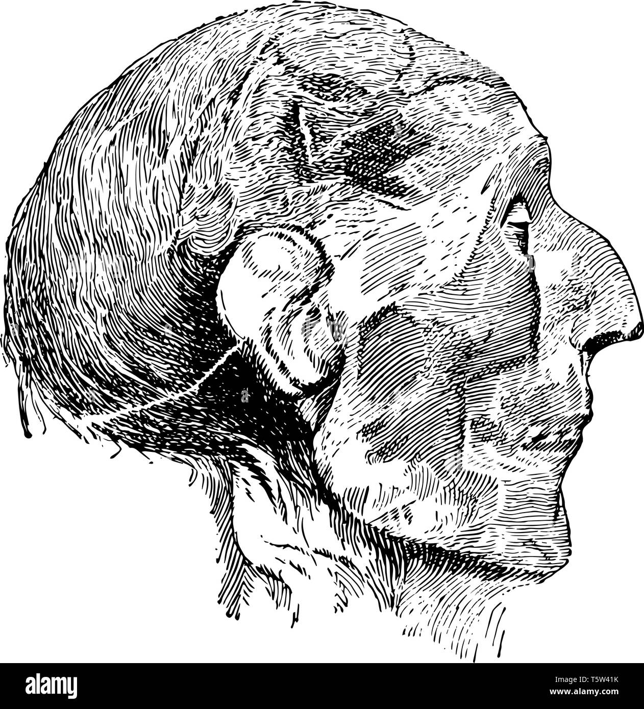 Head of Mummy of Ramses II was preserved in the Egyptian Museum in Cairo, vintage line drawing or engraving illustration. - Stock Vector
