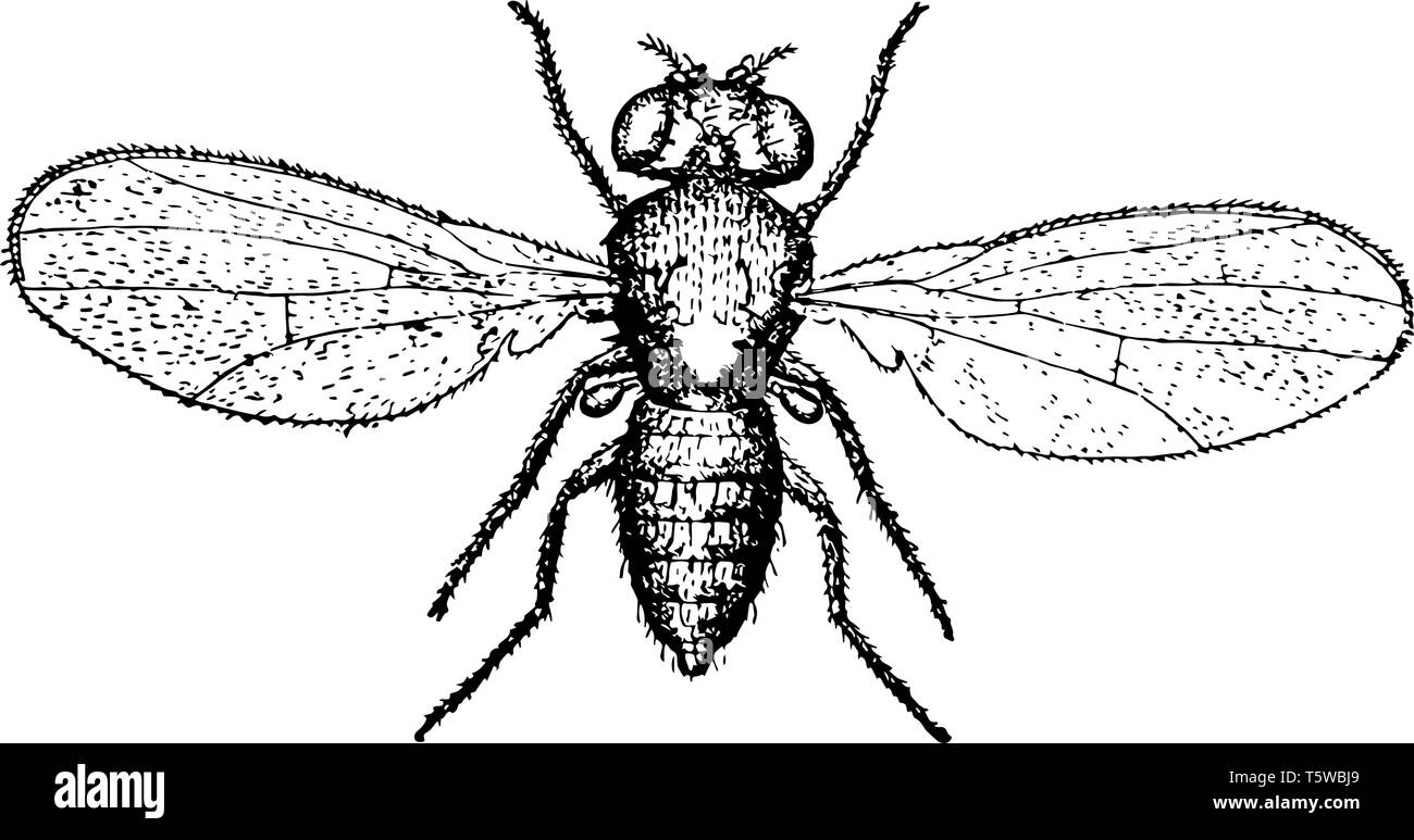 Gnats Black and White Stock Photos & Images - Alamy