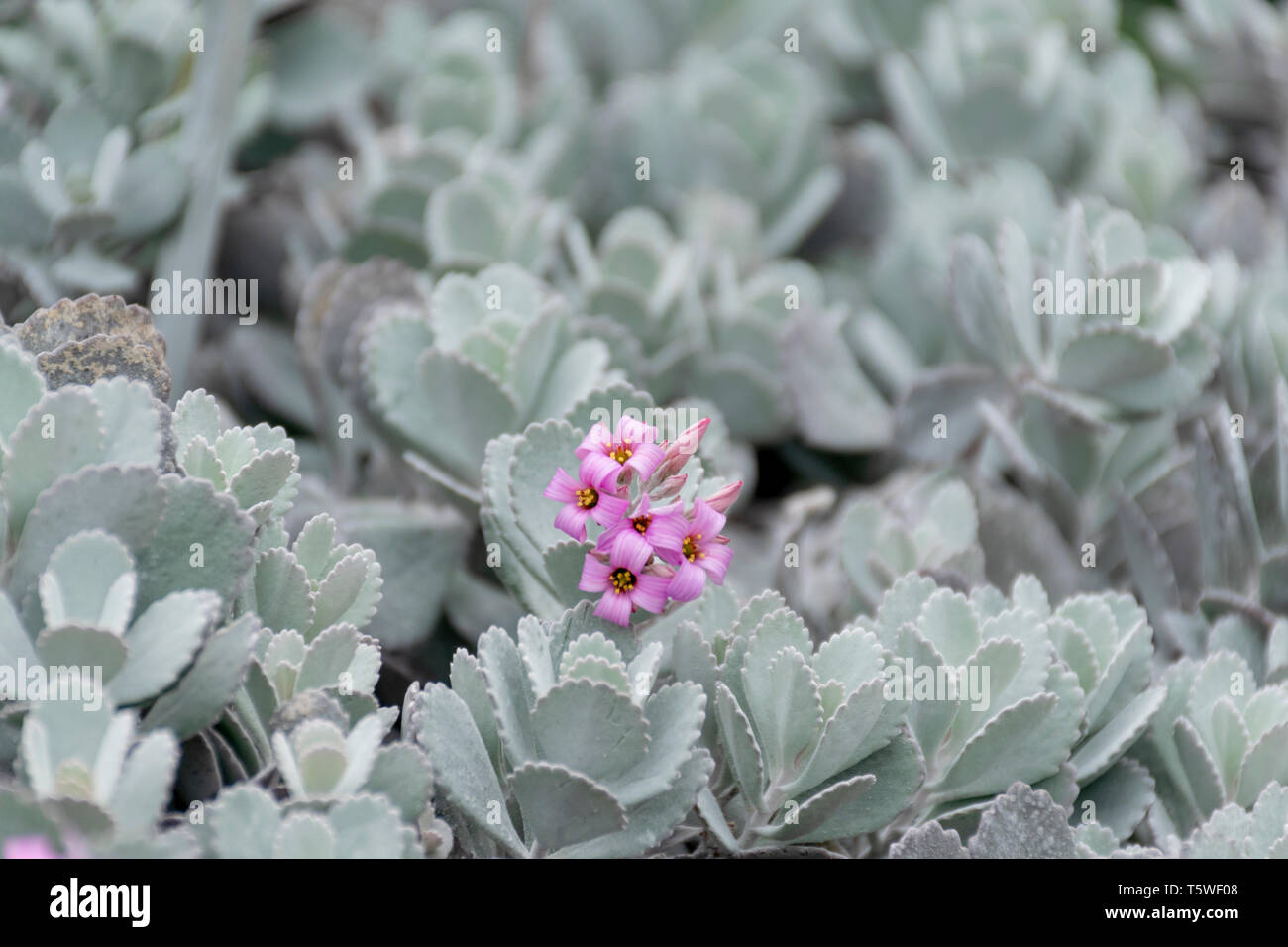 Cactus at Flower Dome - Garden By The Bay - Singapore - Stock Image