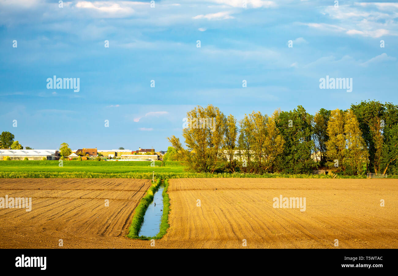 open agriculture grass land in The Netherlands preparing for summer crops - Stock Image