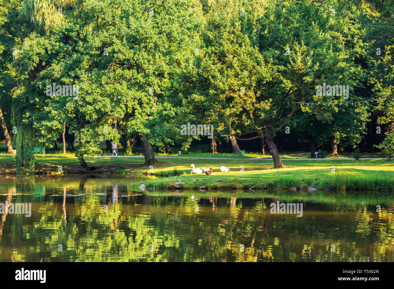pond in the morning park. beautiful scenery in sunlight. ducks on the shore. reflection in the water surface - Stock Image
