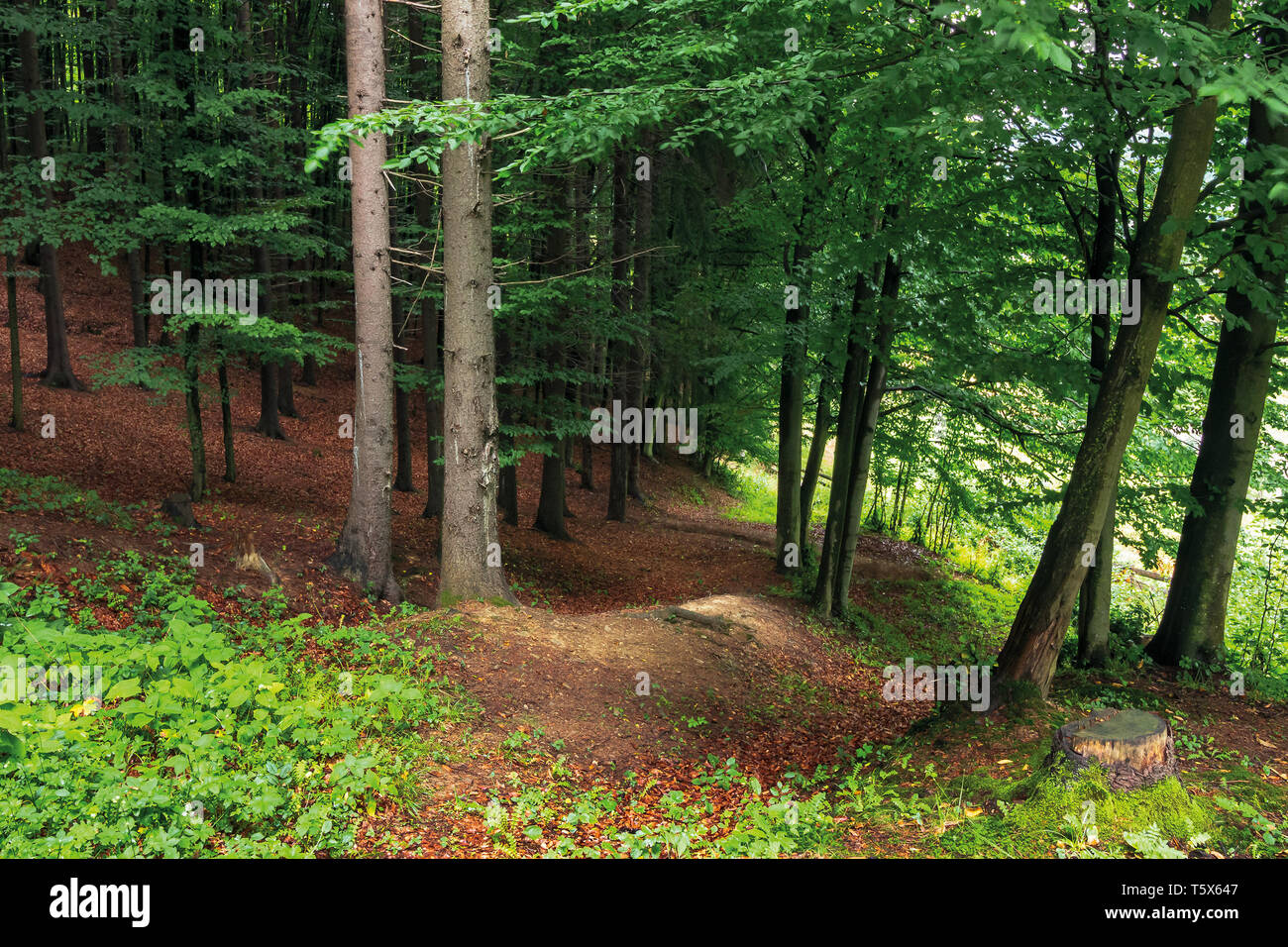 in the shade of a green forest. beautiful nature background. - Stock Image