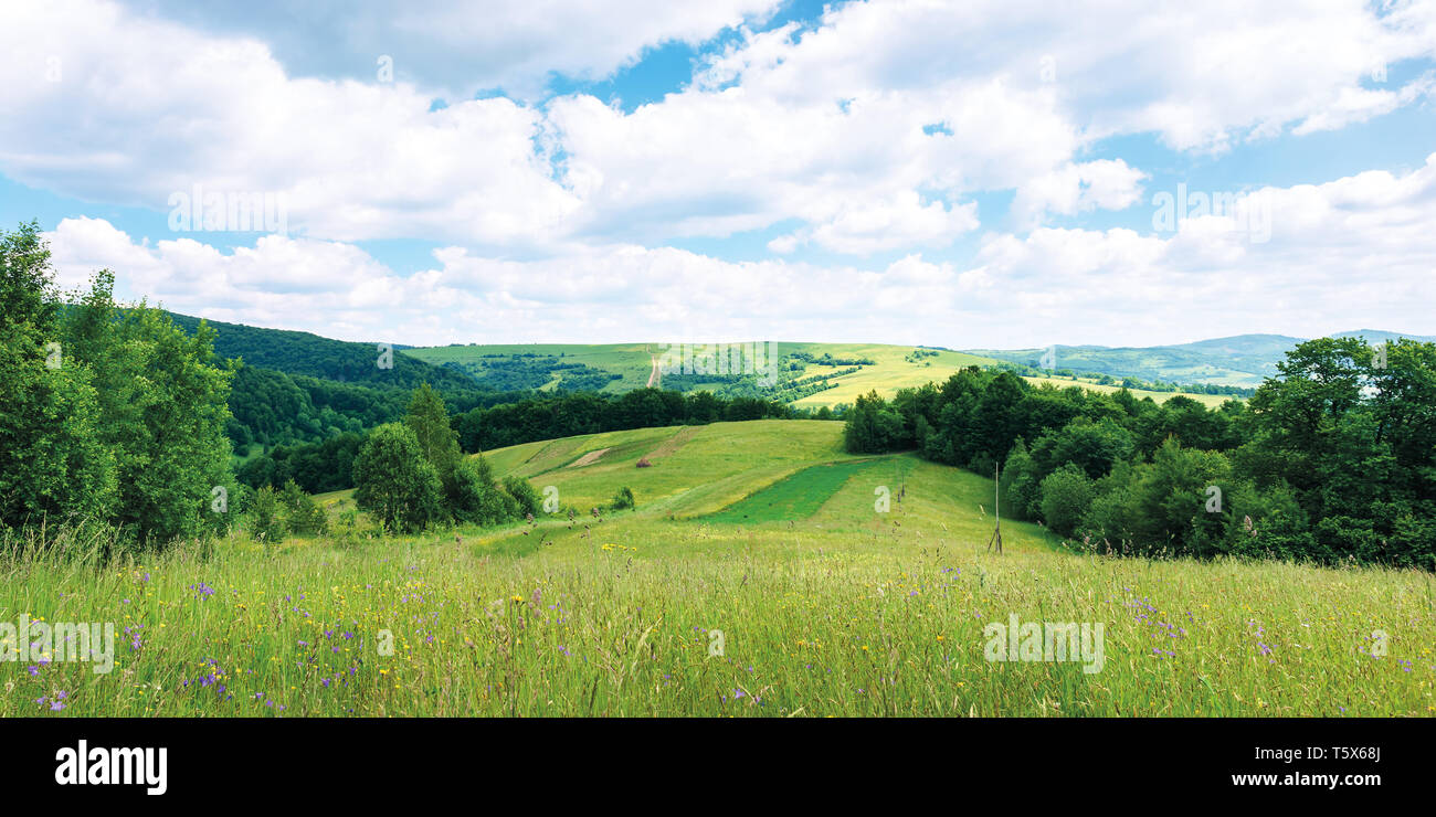 panoramic summer countryside in mountains. wonderful sunny day scenery. grassy rural fields and meadows with wild herbs. hills and mountains in the di - Stock Image