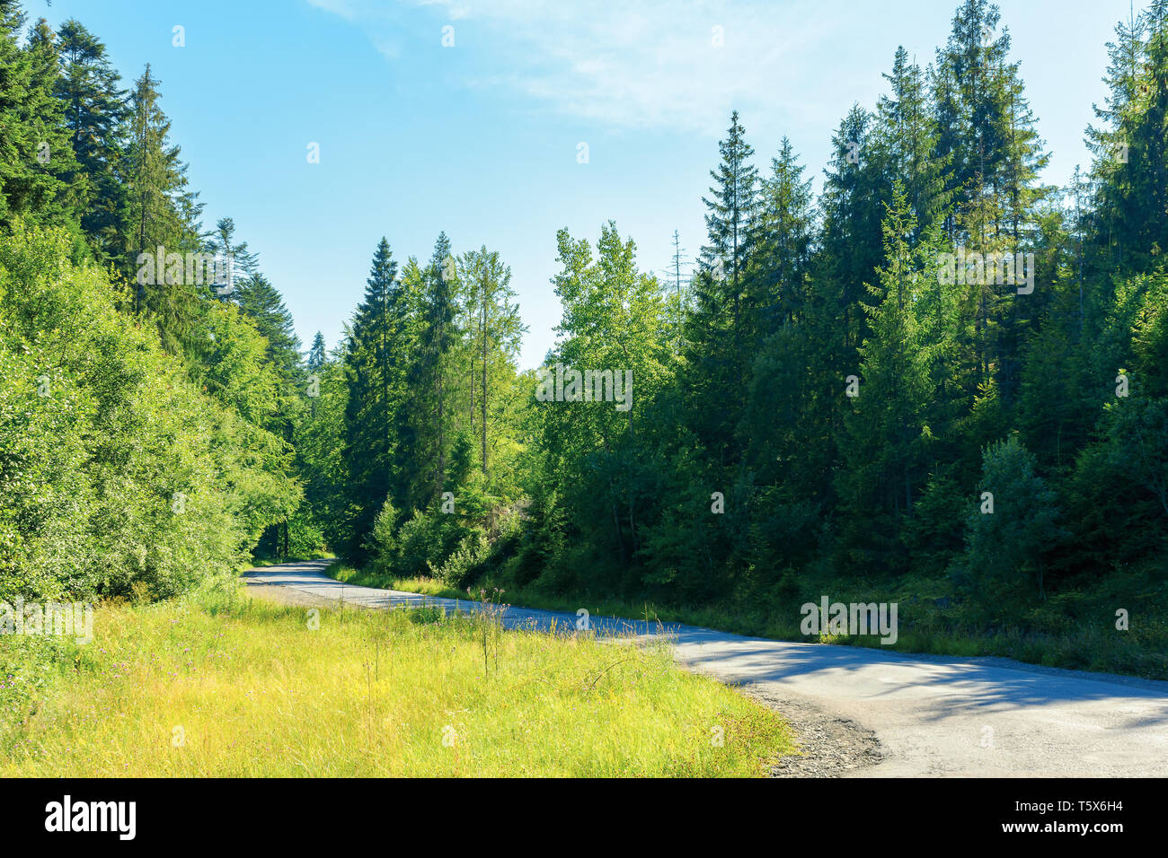 serpentine winding through country forest. beautiful scenery on a bright summer day. explore back country - travel by car concept. transportation back - Stock Image