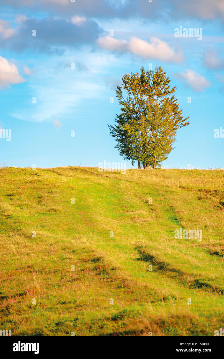 lonely tree on the hillside in warm evening light. beautiful countryside scenery at sunset. weathered grass on the meadow. gorgeous turquoise sky with - Stock Image