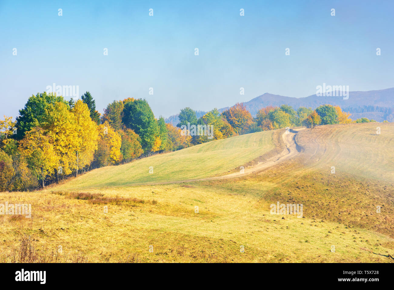 early autumn countryside scenery in foggy weather. row of trees in colorful foliage on the hill along the road. wonderful bright morning background in - Stock Image