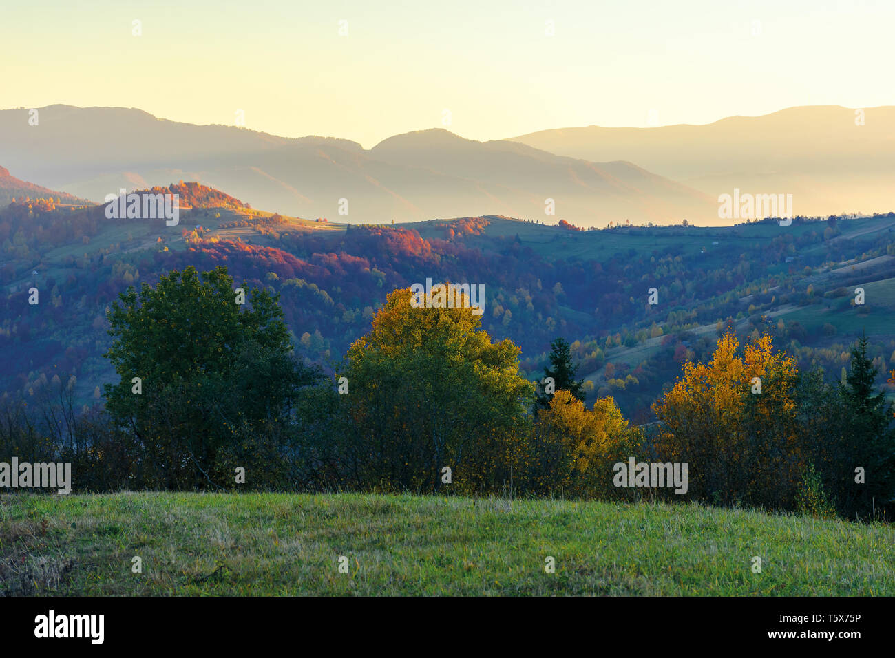wonderful autumn landscape at dawn.  beautiful countryside scenery in mountains. trees in colorful foliage. rural area of carpathians. distant ridge i - Stock Image
