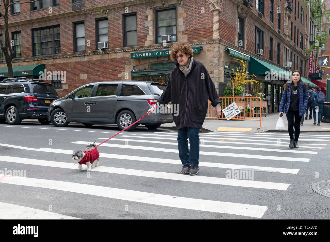 A middle aged woman walking her small dog on University Place in Greenwich Village, Manhattan, New York City. Stock Photo